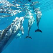 毛里求斯快艇觀海豚、浮潛一日遊