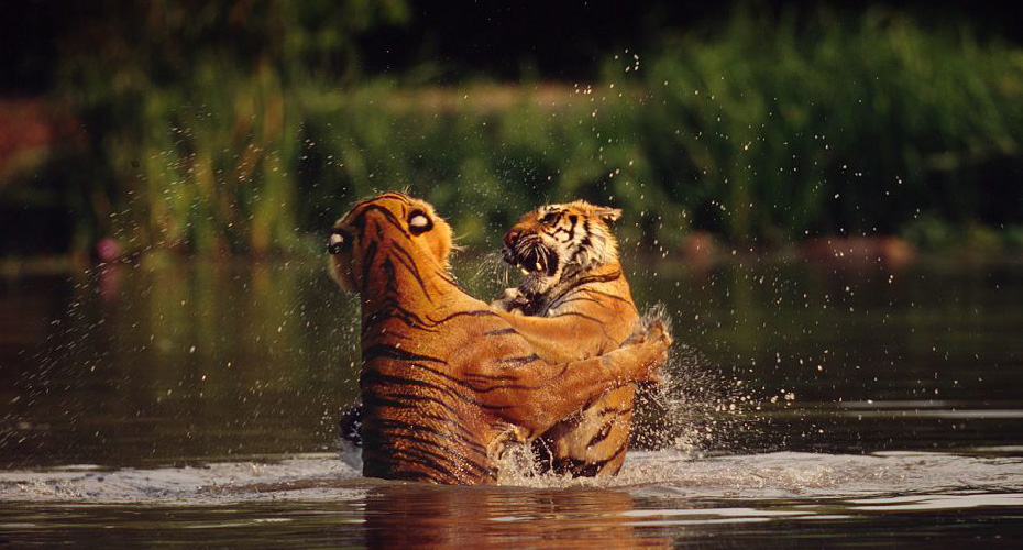 泰國曼谷野生動物世界套票