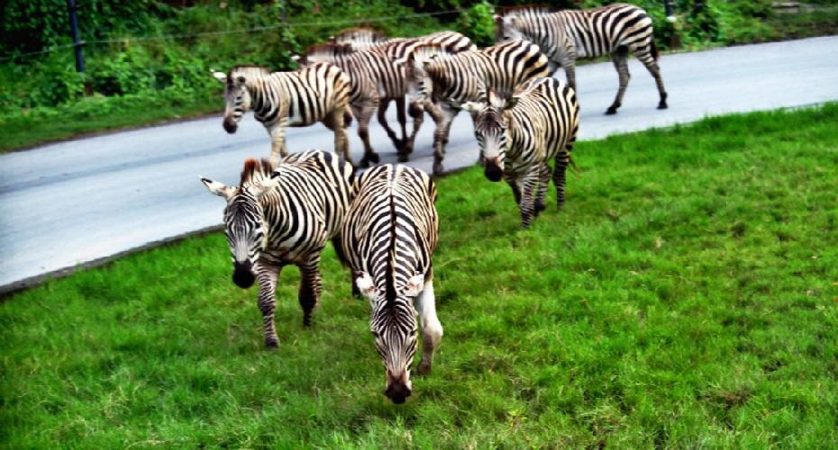 泰國曼谷野生動物園六合一門票套票,泰國曼谷野生動物園Safari-World六合一門票套票,泰國曼谷野生動物世界Safari-World六合一門票優惠,泰國曼谷野生動物園Safari-World六合一門票價錢,泰國曼谷野生動物園Safari-World六合一門票購票,泰國曼谷野生動物世界門票