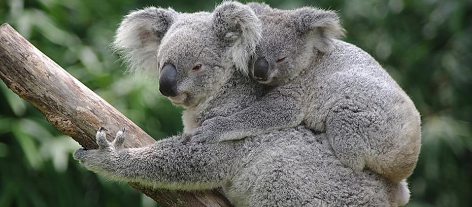 悉尼藍山一日遊,悉尼藍山租車一日遊,悉尼藍山包車一日遊,悉尼藍山自助遊,悉尼藍山自由行,悉尼藍山旅遊攻略