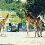 甘孟山城野生動物園門票