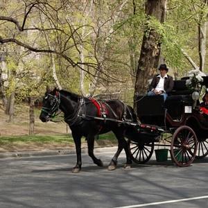 紐約經典體驗,乘私人馬車在中央公園兜風