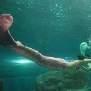 洛陽龍門海洋館
